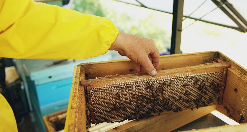 wosk pszczeli gdzie kupić